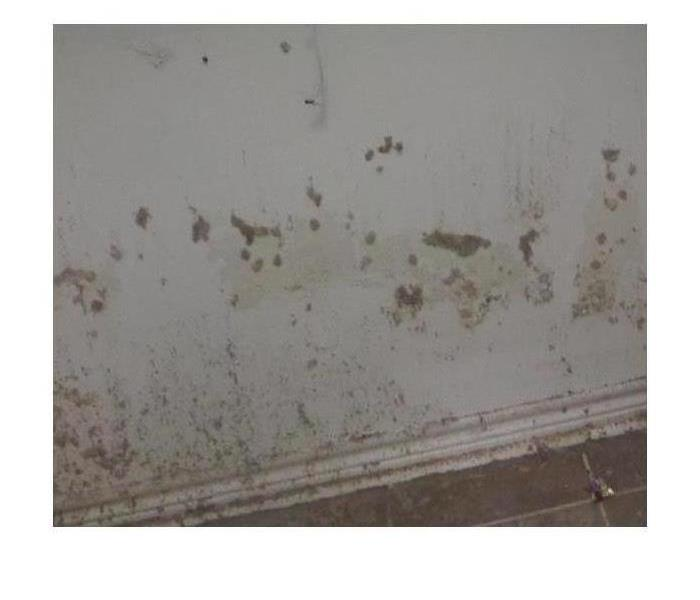 Mold on Everything in Mobile, AL Before